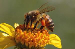 Vigyázzunk a méhekkel