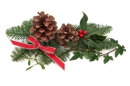 Karácsonyfa tartósítás titka