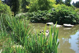 A vízi növények akár percek alatt elpusztulnak vízhiány esetén