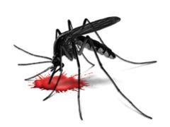 Szúnyog ellen