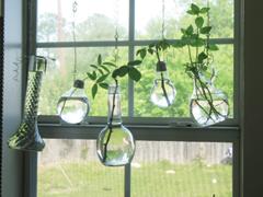 Növényszaporítás azonnal