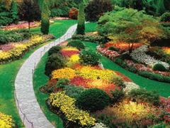 Növénybarát szervezetek hazánkban és a nagyvilágban