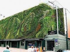 """Vertikális """"fali"""" kertek"""