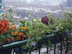 Balkonnövények ültetése, gondozása