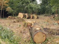 A fa megújuló energiaforrás