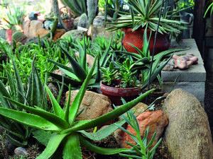 Növénysarok a lakásban