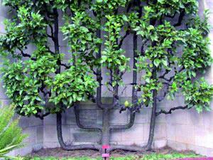 Gyümölcssövények térhatárolónak