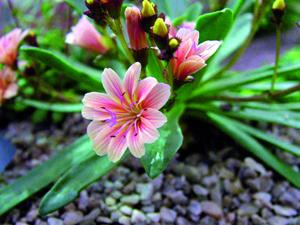 Ékszernövények kis helyre is
