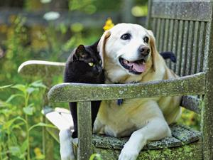 Kutyák és macskák a kertben