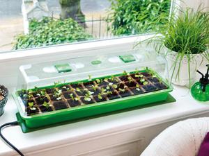 Levélvágásos növényszaporítások