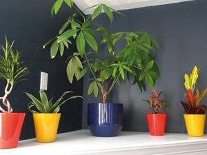 Dísznövény újdonságok