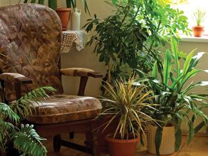 Szobanövények az otthonunkban