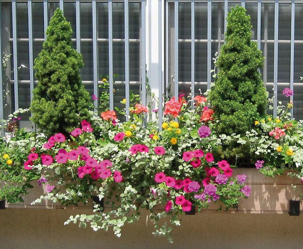 Növények balkonládákban