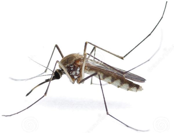 Szúnyogháló utólag