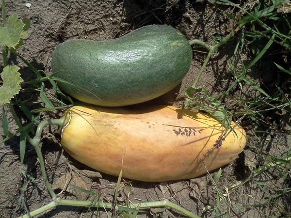 Különleges zöldségek