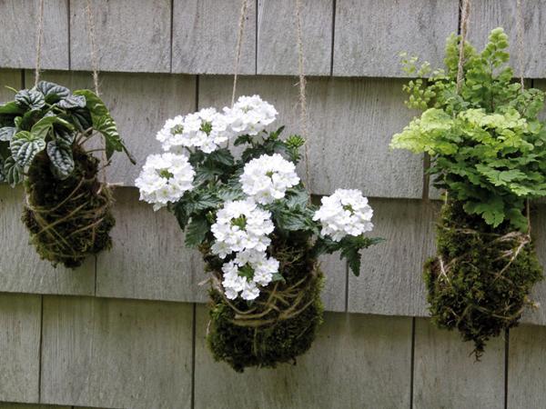 Kokedama: növény és művészet