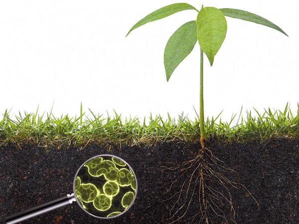 Talajfertőtlenítési módszerek