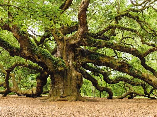 Fák a kertben