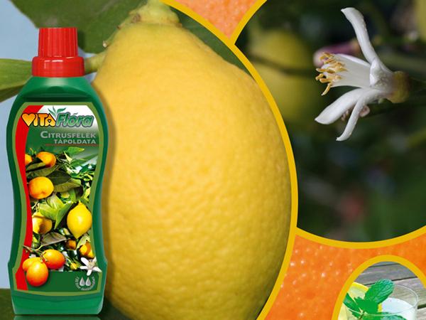 Hűsítő limonádé