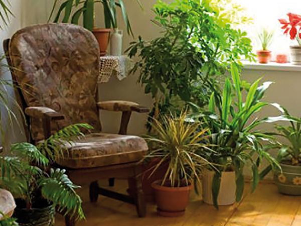 Nyaraló növények beköltöztetése
