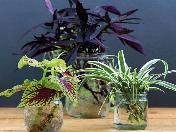 Szárazföldi növények vízben