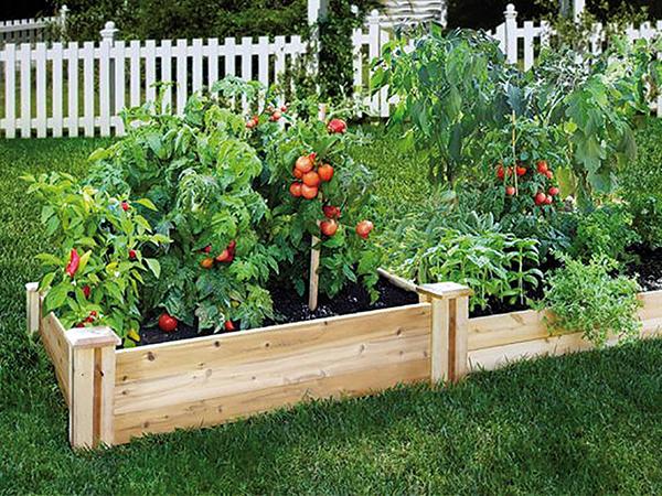 Növényszigetek: magaságyás, emeltágyás