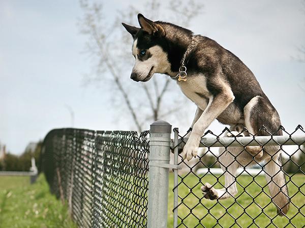 Kutya szökésgátlók