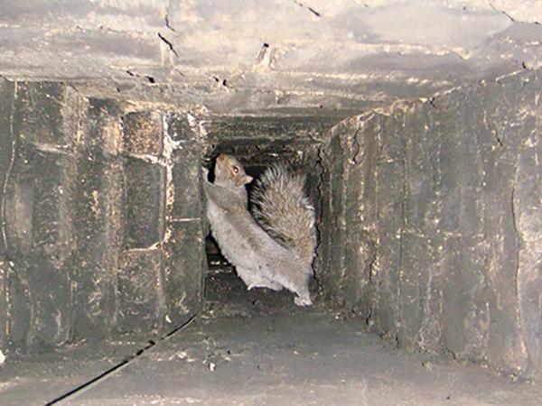 Madarak és egyéb állatok a kéményben