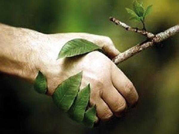Intelligens növények