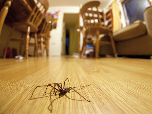 Pókok otthonunkban