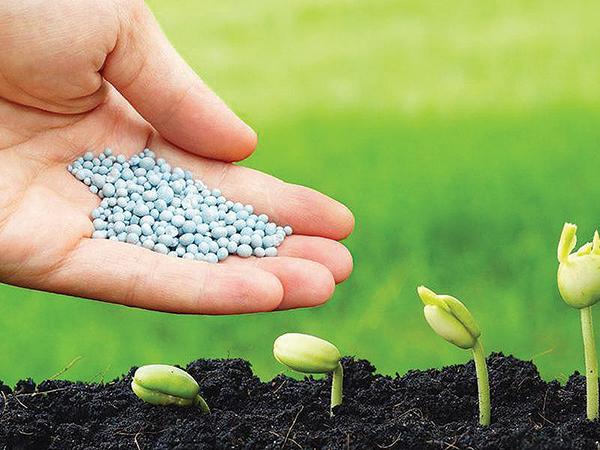 Növények alapvető tápanyagai