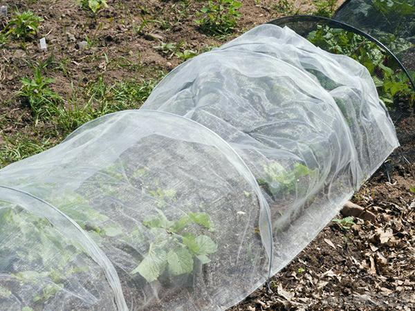 Növények takarása