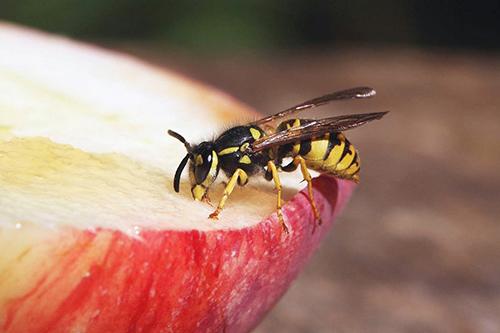 közös méhcsípés-kezelés