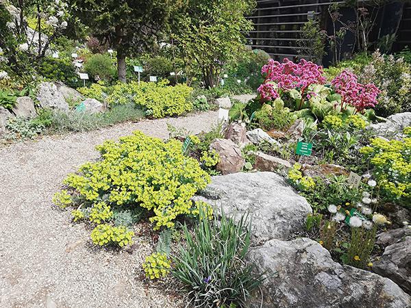 Alpesi kertek kicsiben, vagy nagyban…