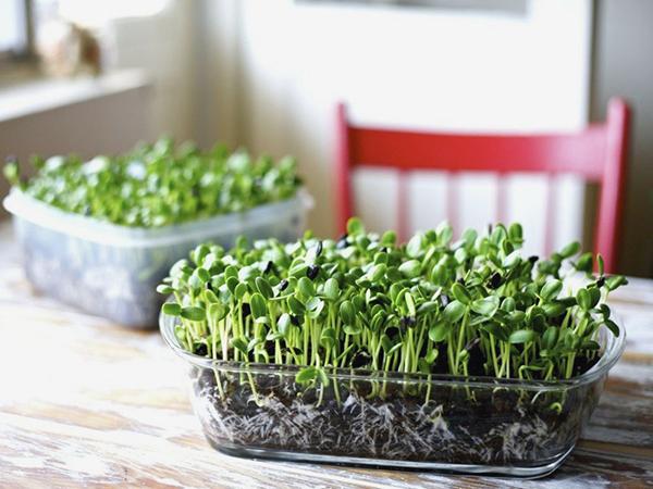 Mikrozöldség szezon van