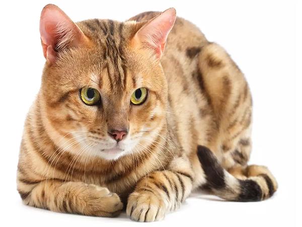 Olcsó házak cicáknak