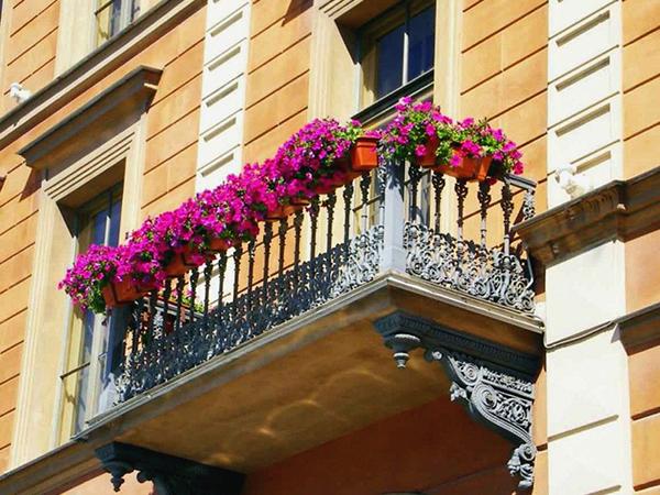 Balkonládák növényei