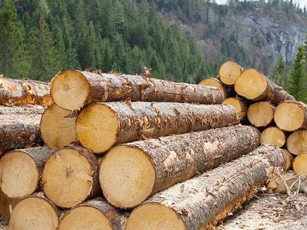 A legősibb építőanyag a fa