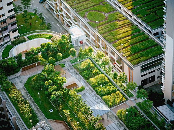 A zöldtetők fontossága a város életében