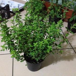 Fűszernövények a lakásban