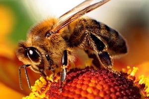 Gyógyítás mézzel