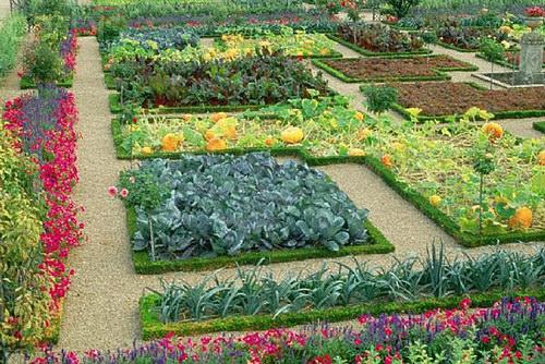 Különleges zöldségek a kiskertbe!