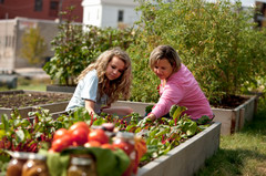 Kiskerti zöldségtermesztés (3. rész)