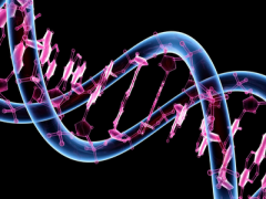 A genetikai hajlam nem sorsszerűen jelent elhízást